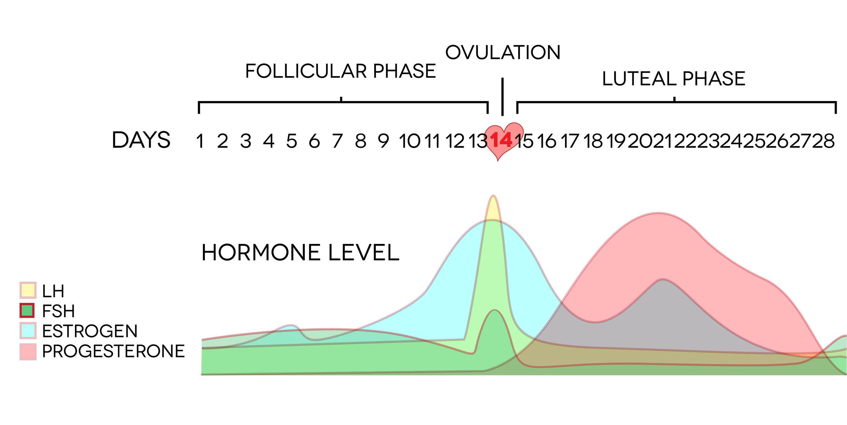 Ovulation, hormone levels, trying to conceive